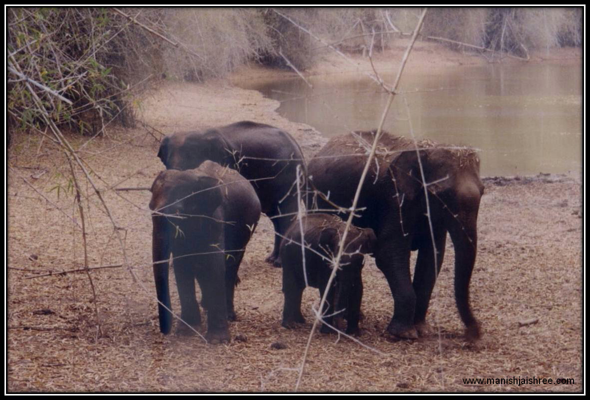 Elephant family in Bandipur