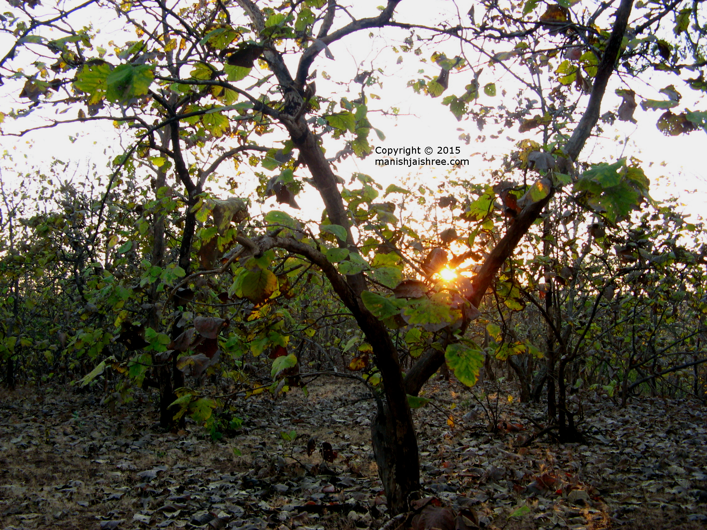 Sunset at Sasan Gir