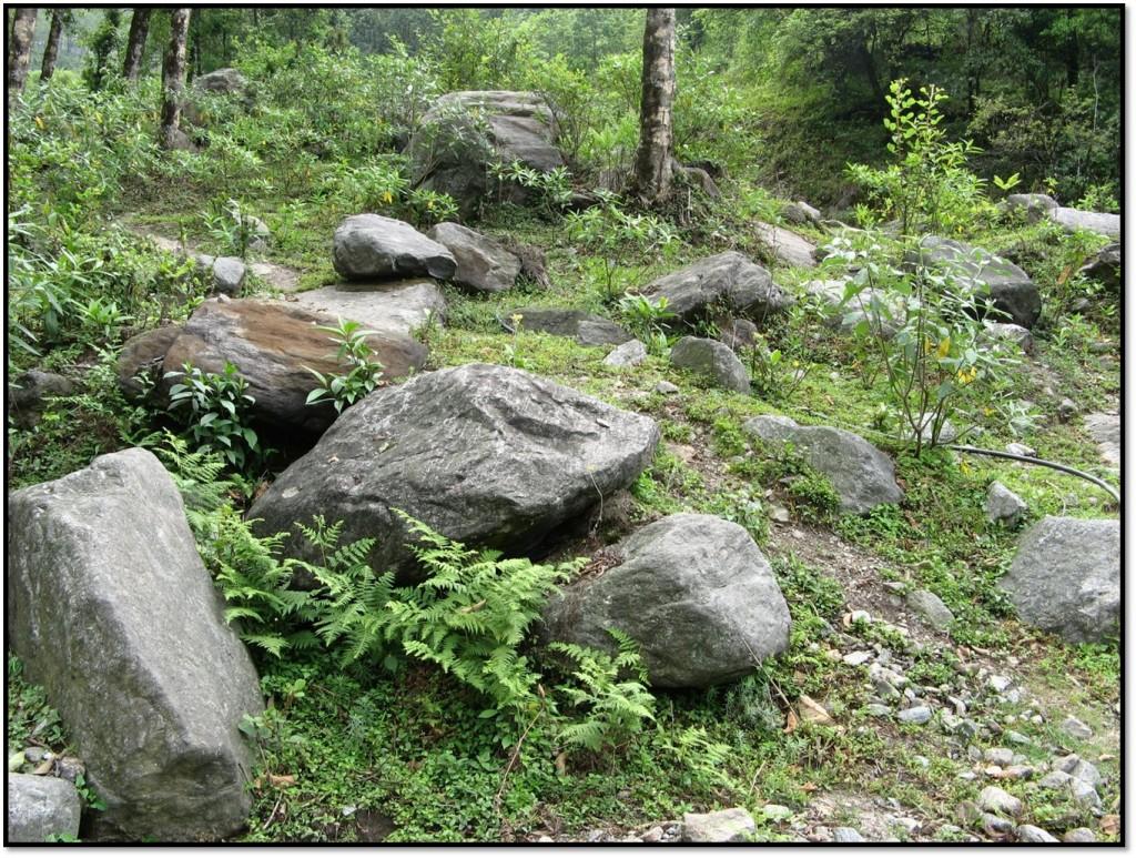 Summer in Sikkim- Part V – Yuksom and away