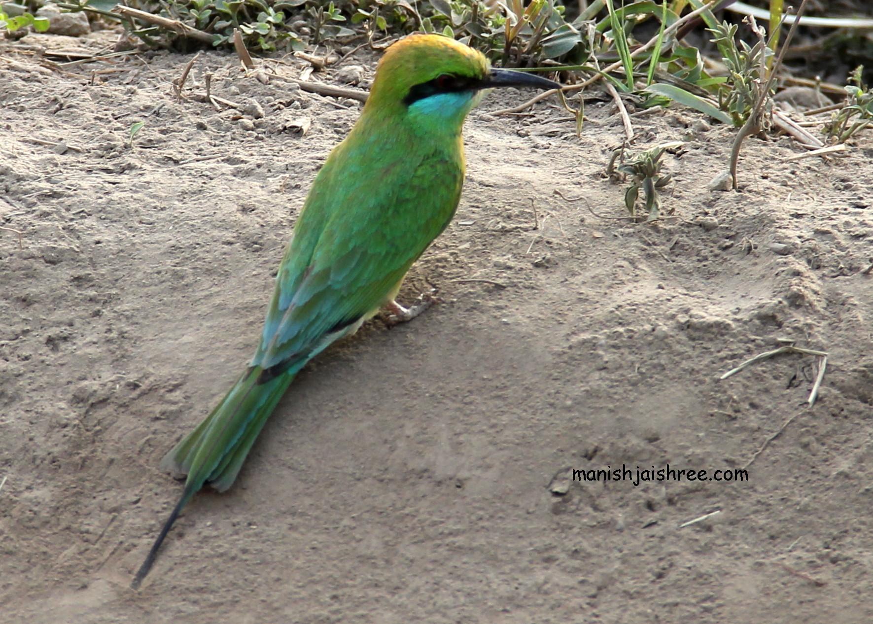 Bird- B 1